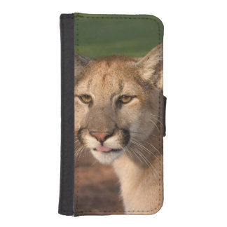 USA, Florida panther (Felis concolor) is also Phone Wallet Case