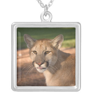USA, Florida panther (Felis concolor) is also Silver Plated Necklace