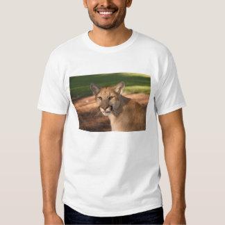 USA, Florida panther (Felis concolor) is also Tee Shirt