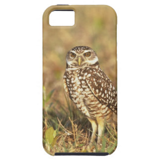 USA, Florida, Pompano Beach. A burrowing owl in iPhone SE/5/5s Case