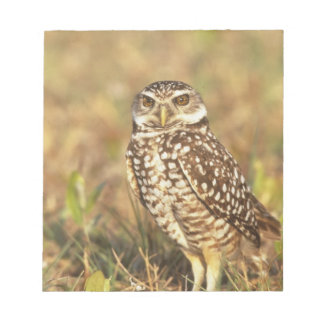 USA, Florida, Pompano Beach. A burrowing owl in Notepad