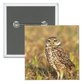 USA, Florida, Pompano Beach. A burrowing owl in Pinback Button