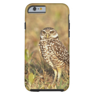 USA, Florida, Pompano Beach. A burrowing owl in Tough iPhone 6 Case