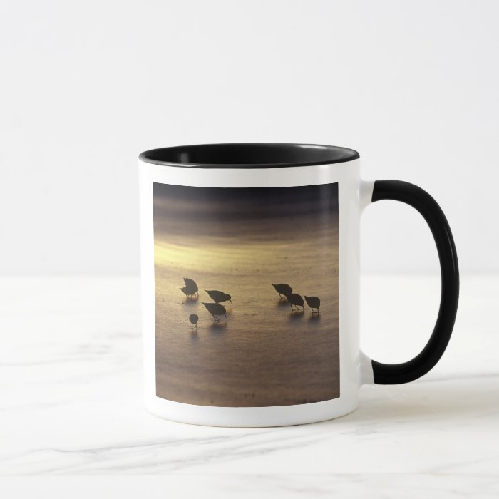 USA, Florida, Sanderlings Mug