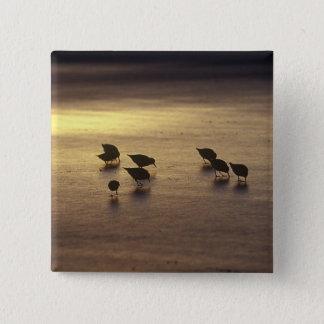 USA, Florida, Sanderlings Pinback Button