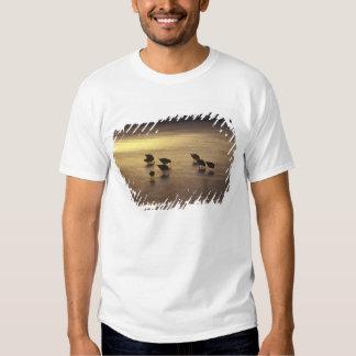 USA, Florida, Sanderlings Shirts