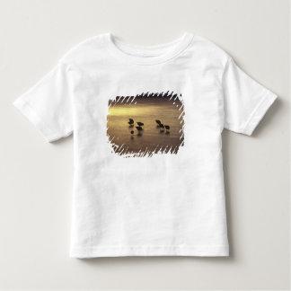 USA, Florida, Sanderlings Toddler T-shirt