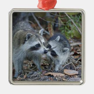 USA, Florida, Sanibel, Ding Darling National Metal Ornament