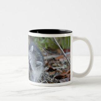 USA, Florida, Sanibel, Ding Darling National Two-Tone Coffee Mug
