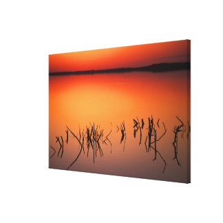 USA, Florida. Silhouettes of dead tree branches Canvas Print