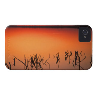 USA, Florida. Silhouettes of dead tree branches iPhone 4 Covers