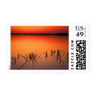 USA, Florida. Silhouettes of dead tree branches Postage Stamp