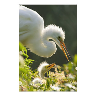 USA, Florida, St. Augustine, Alligator farm Photo Print
