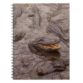 USA, Florida, St. Augustine, Alligators Spiral Note Book