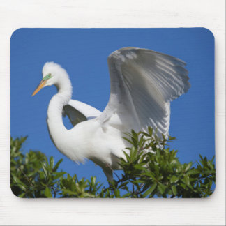 USA, Florida, St. Augustine, Egret Mouse Pad