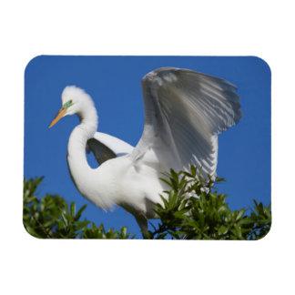 USA, Florida, St. Augustine, Egret Rectangular Photo Magnet