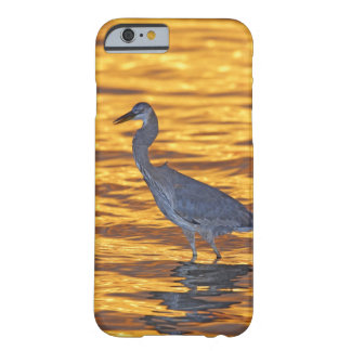 USA, Florida, St. Petersburg, Fort De Soto Park. Barely There iPhone 6 Case