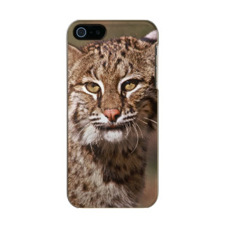 USA, Florida, swamp ecosystem Incipio Feather® Shine iPhone 5 Case