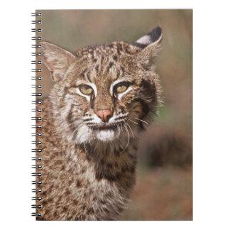 USA, Florida, swamp ecosystem Notebooks