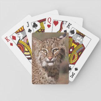 USA, Florida, swamp ecosystem Playing Cards