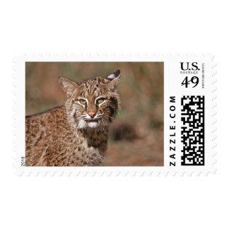 USA, Florida, swamp ecosystem Postage Stamp