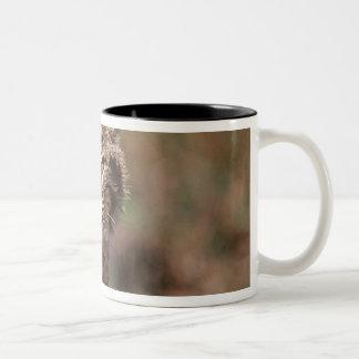 USA, Florida, swamp ecosystem Two-Tone Coffee Mug