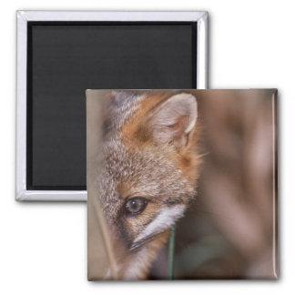 USA, Florida, Swamp Fox 2 Inch Square Magnet