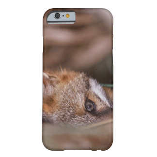 USA, Florida, Swamp Fox Barely There iPhone 6 Case