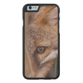 USA, Florida, Swamp Fox Carved Maple iPhone 6 Case
