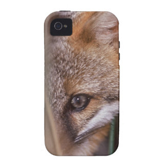 USA, Florida, Swamp Fox Vibe iPhone 4 Cover