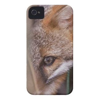 USA, Florida, Swamp Fox Case-Mate iPhone 4 Case