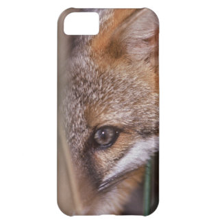 USA, Florida, Swamp Fox Cover For iPhone 5C