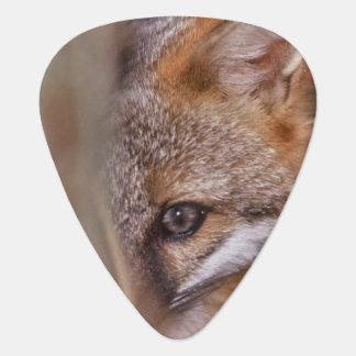 USA, Florida, Swamp Fox Guitar Pick