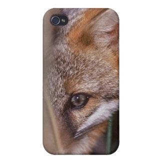 USA, Florida, Swamp Fox iPhone 4/4S Covers