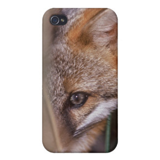 USA, Florida, Swamp Fox iPhone 4/4S Covers