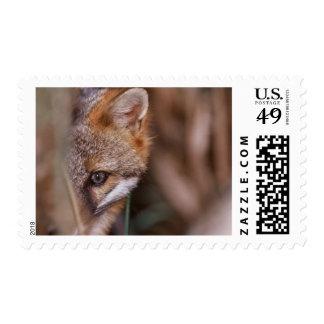 USA, Florida, Swamp Fox Postage