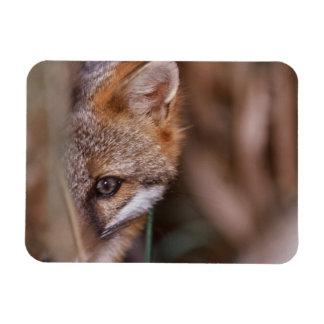 USA, Florida, Swamp Fox Rectangular Photo Magnet