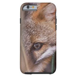 USA, Florida, Swamp Fox Tough iPhone 6 Case