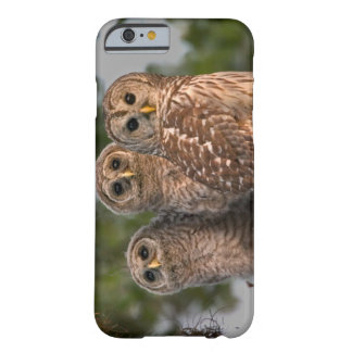 USA, Florida, Viera Wetlands. Three barred Barely There iPhone 6 Case