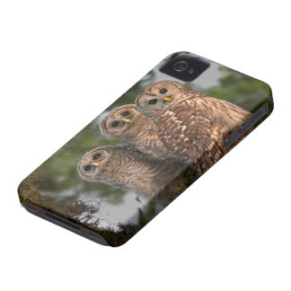 USA, Florida, Viera Wetlands. Three barred Case-Mate iPhone 4 Case