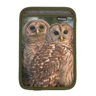 USA, Florida, Viera Wetlands. Three barred iPad Mini Sleeves