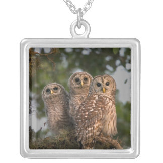 USA, Florida, Viera Wetlands. Three barred Silver Plated Necklace