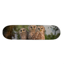 USA, Florida, Viera Wetlands. Three barred Skateboard