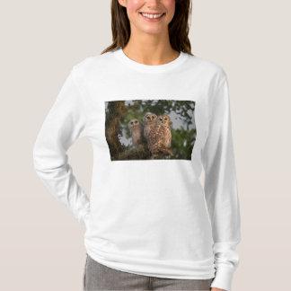 USA, Florida, Viera Wetlands. Three barred T-Shirt