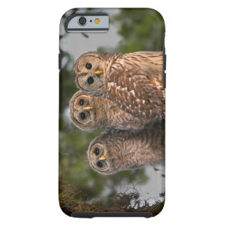 USA, Florida, Viera Wetlands. Three barred Tough iPhone 6 Case