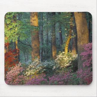 USA, Georgia, Callaway Gardens, Azalea forest. Mouse Pad