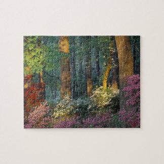 USA, Georgia, Callaway Gardens, Azalea forest. Puzzle