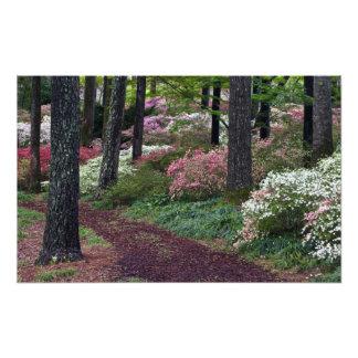 USA, Georgia, Callaway Gardens. Pathway Photo Print