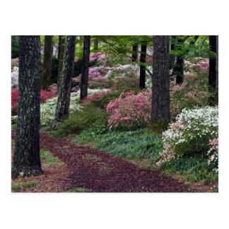 USA, Georgia, Callaway Gardens. Pathway Postcard