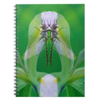 USA, Georgia. Dragonfly montage Notebook